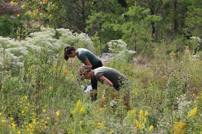 Invasive Species Assessment_Ultramafic Prairie.JPG